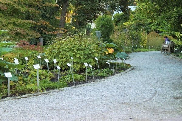 Botanical Garden Antwerp