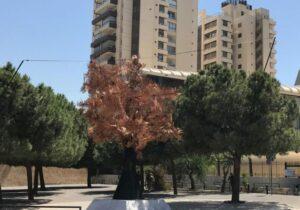 Memory Tree Beirut