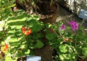 Botanischer Garten Bern Bern