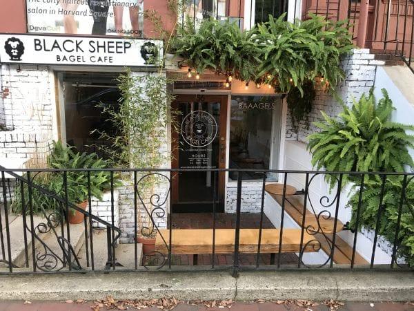 Black Sheep Bagel Cafe Boston