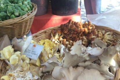 Copley Square Farmer's Market Boston