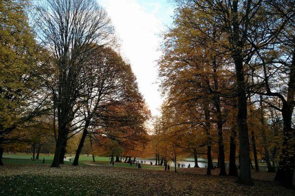 Bois de La Cambre Brussels