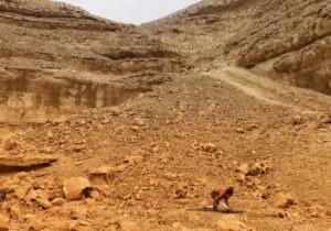 Wadi Degla Protectorate Cairo