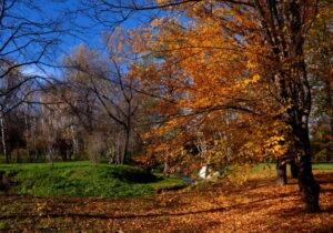 Dendrarium Park Chisinau