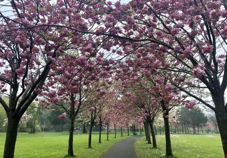 Herbert Park Dublin