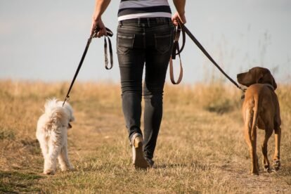 10 Best Places to Walk Your Dog in Edinburgh