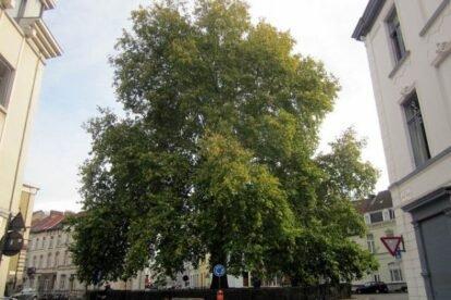 Hug a Tree Ghent