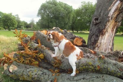 10 Best Places to Walk Your Dog in London