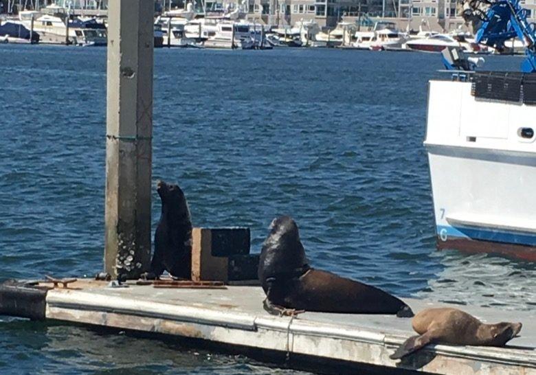 Sunbathing Sea Lions Los Angeles