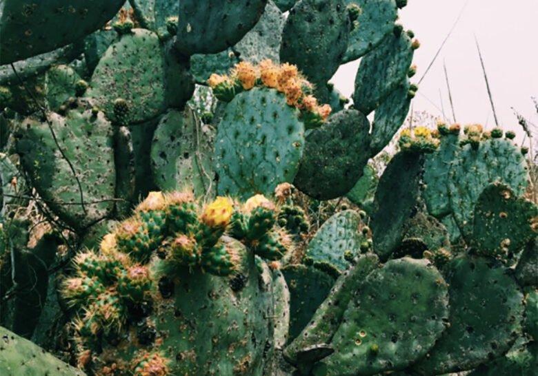 Jardín Botánico UNAM Mexico City