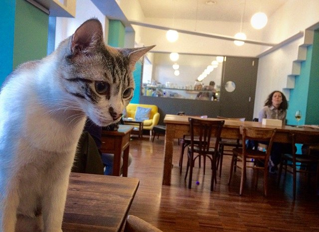 Crazy Cat Café – Wine with friendly cats…