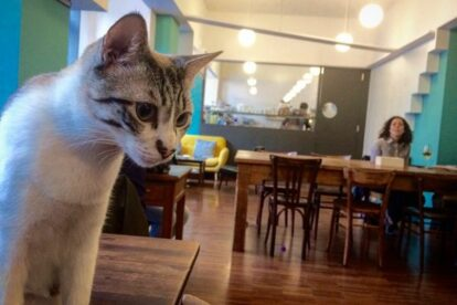 Crazy Cat Café Milan