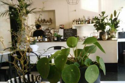 Riad Food Garden – Plants café