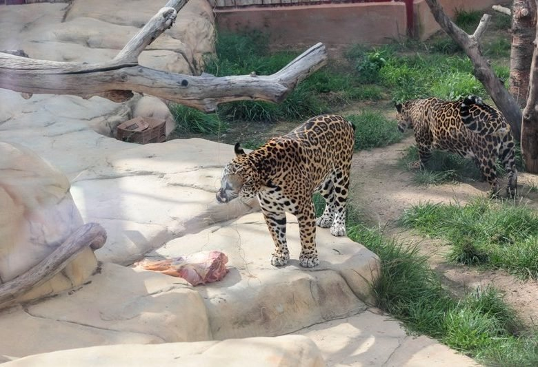 Minsk City Zoo Minsk