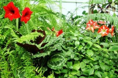 Botanical Garden Aptekarsky Ogorod Moscow