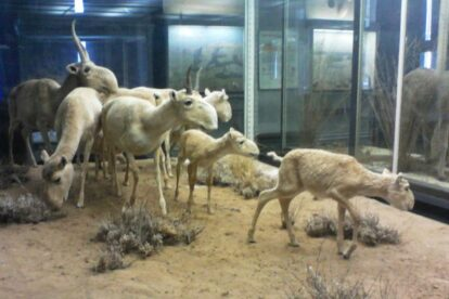 Zoological museum Moscow