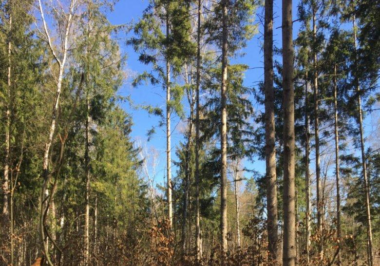 Perlach Forest Munich