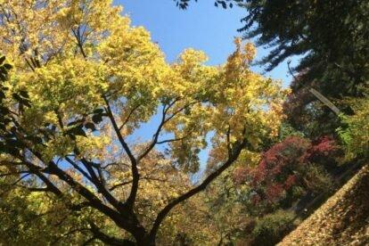Fall Foliage New York