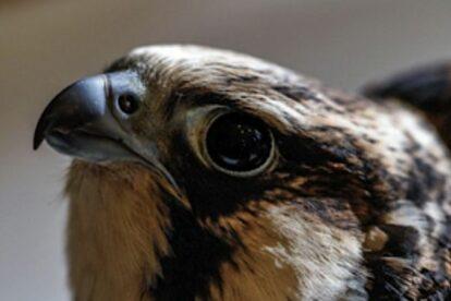 Wild Bird Fund Hospital New York