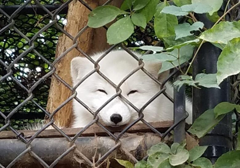 Staten Island Zoo New York