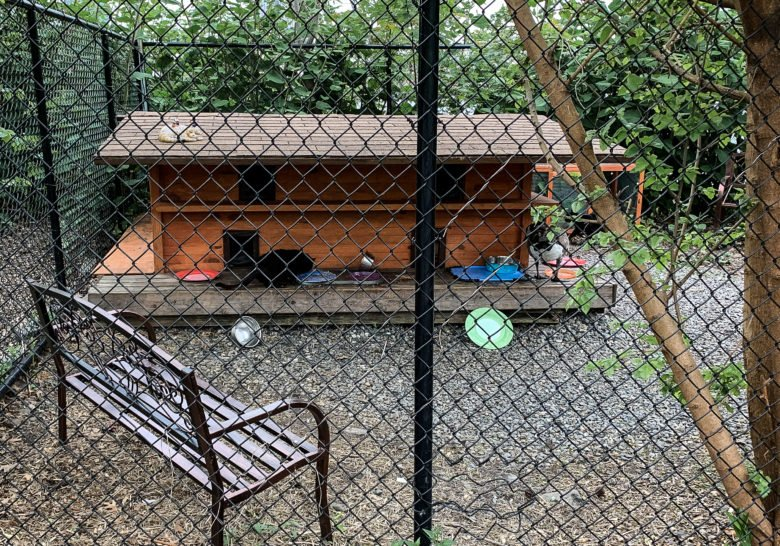WFF Cat Sanctuary New York
