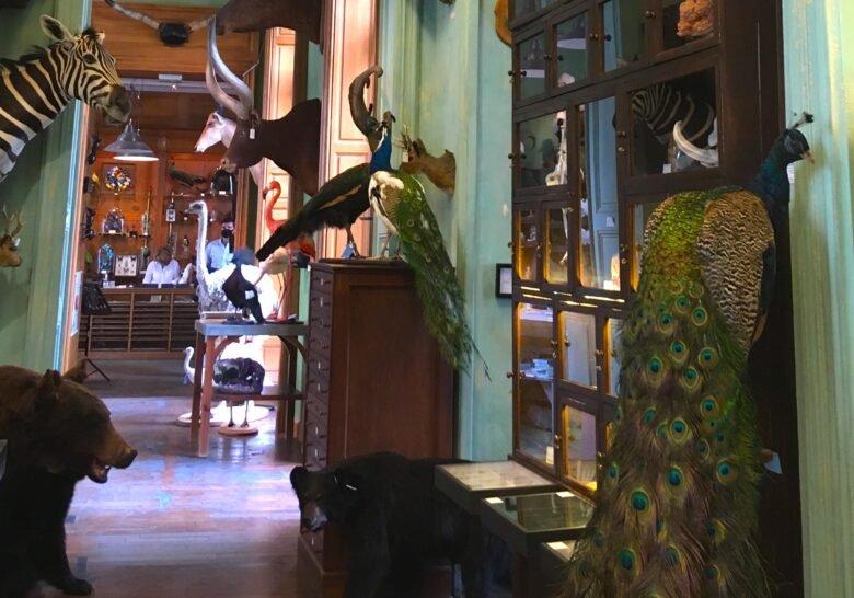 Chez Deyrolle Paris