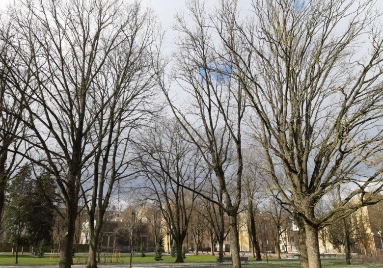 Ziedoņa Dārzs Riga
