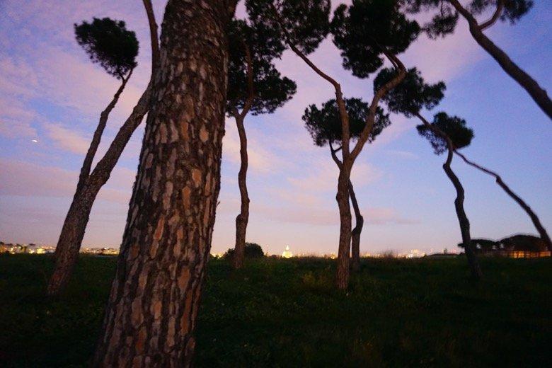 Pineta Sacchetti Rome