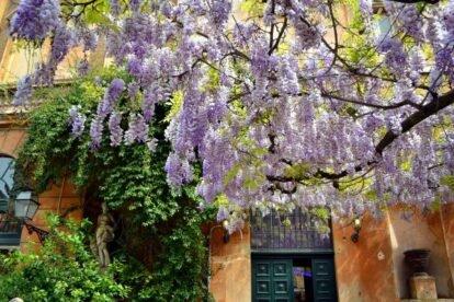 Via Margutta Rome
