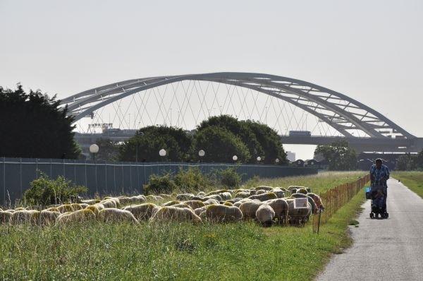 De Esch Rotterdam