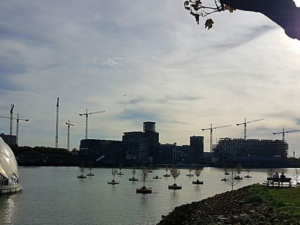 Dobberend Bos Rotterdam