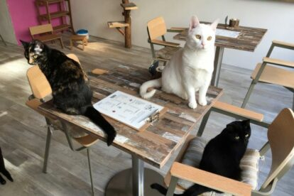Pebbles Kitty Cat Café Rotterdam