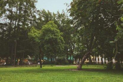 Tauride Garden Saint Petersburg