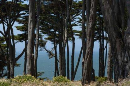 CA Coastal Trail San Francisco