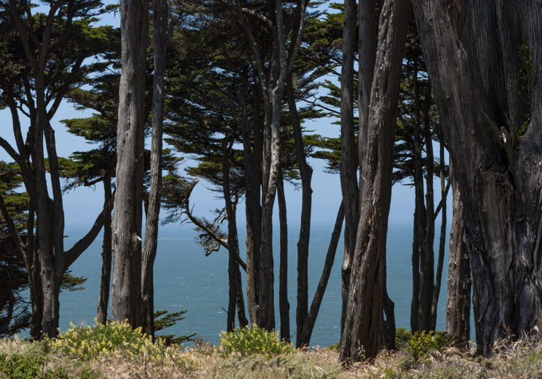 CA Coastal Trail San Francisco