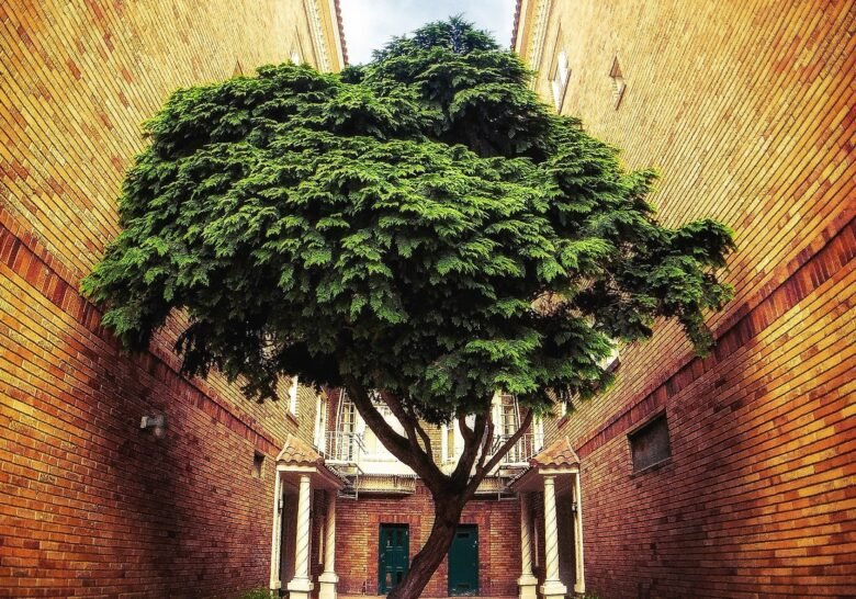 Stanyan Tree San Francisco