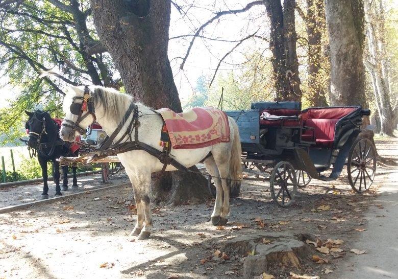 Horse Ride through Big Valley Sarajevo
