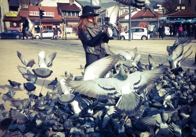 Sarajevo Pigeon Sarajevo