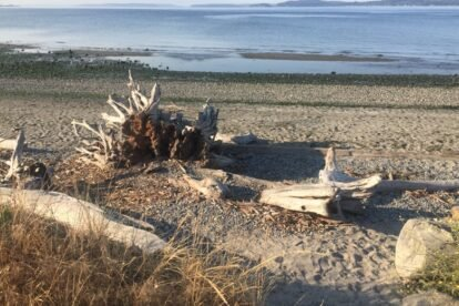 Discovery Park Seattle