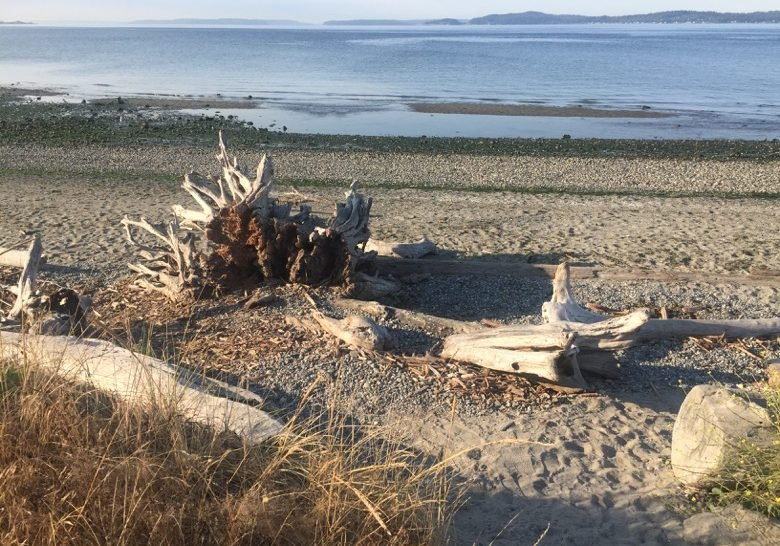 Discovery Park – My wilderness in the city