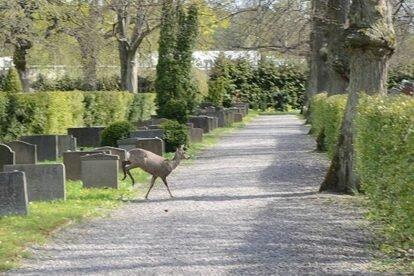 Norra Begravningsplatsen Stockholm
