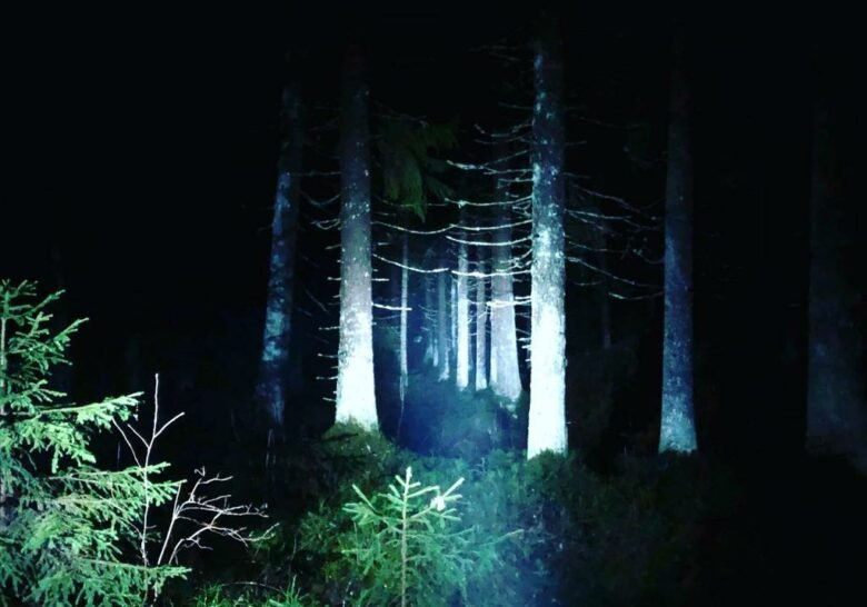 Niihama Nature Trail Tampere