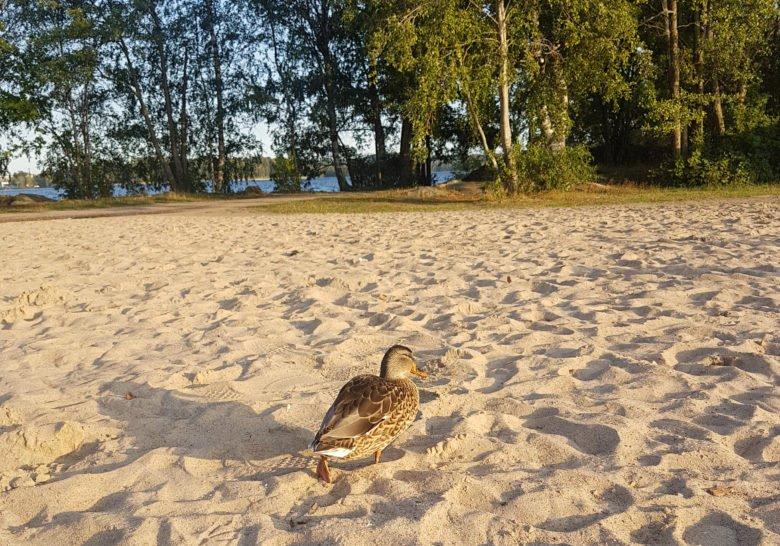 Pyynikki Beach Tampere