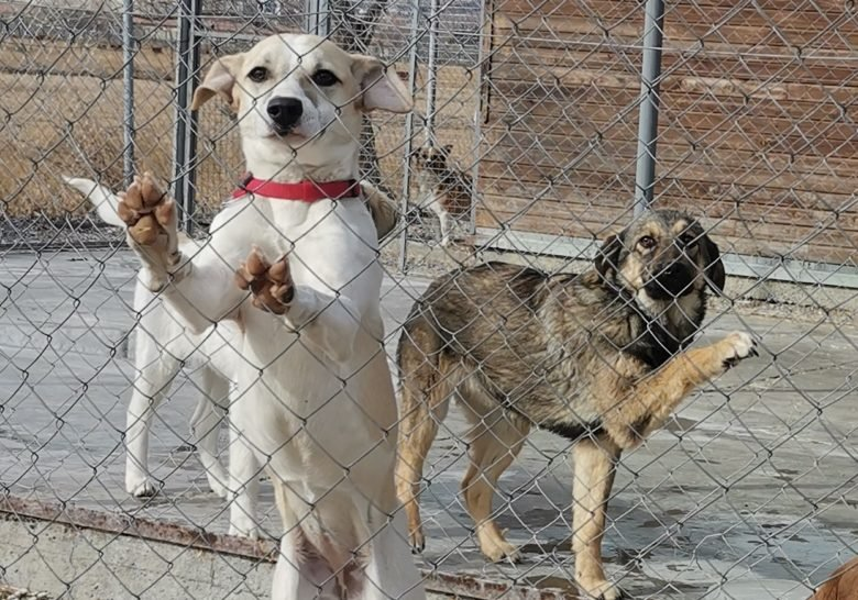 Dog Organization Georgia Tbilisi