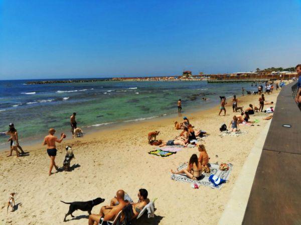 The Dog Beach Tel Aviv