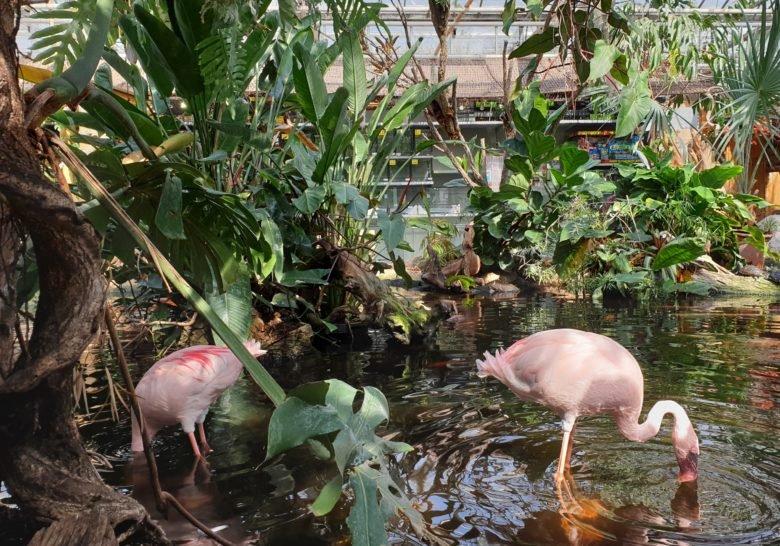 Avonturia De Vogelkelder – Petshop & mini-zoo