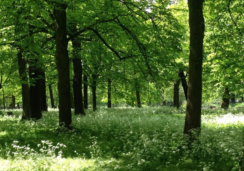 Haagse Bos The Hague