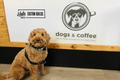 Dogs & Coffee Toronto