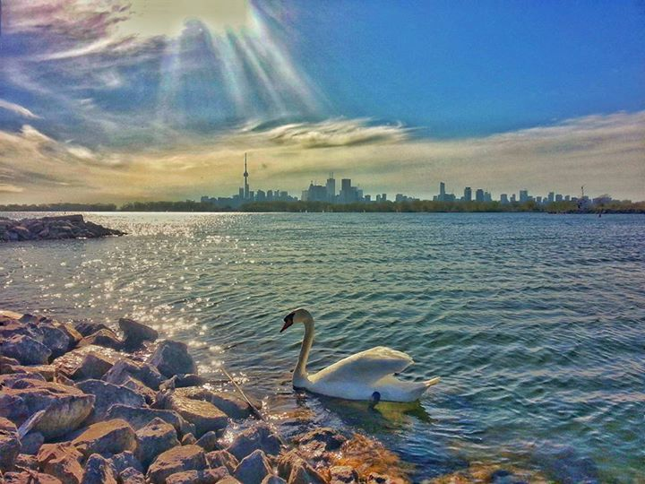 Tommy Thompson Park Toronto