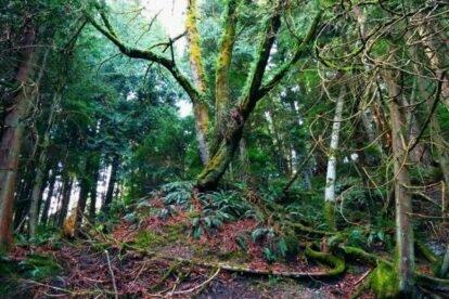 Capilano Pacific Trail Vancouver